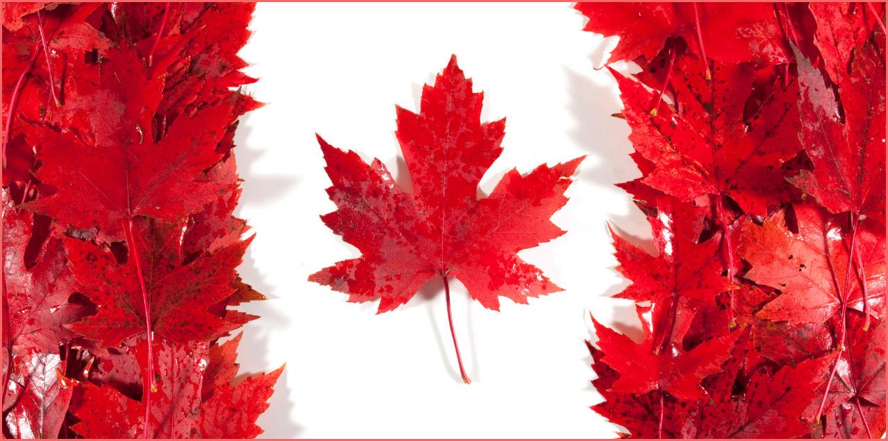 طرق تقديم طلب اللجوء الانساني الى كندا للسوريين بالتفصيل